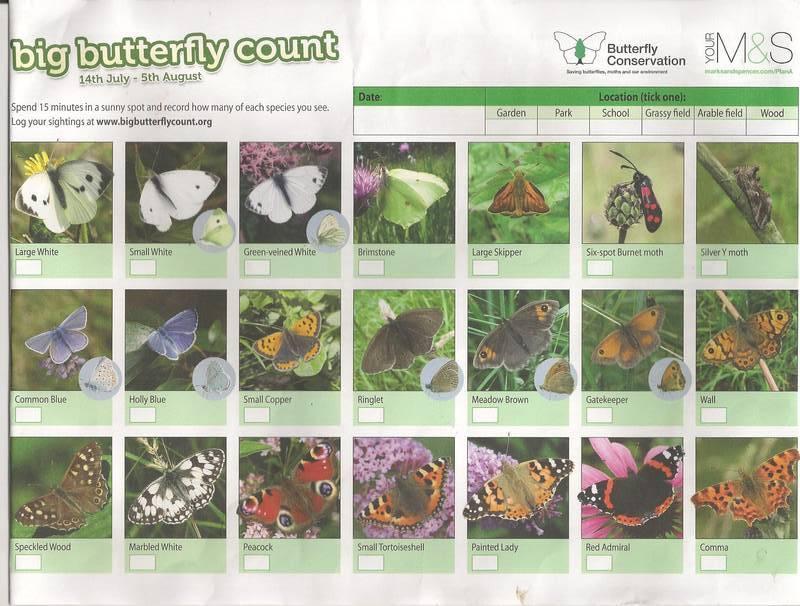 Butterflies Count