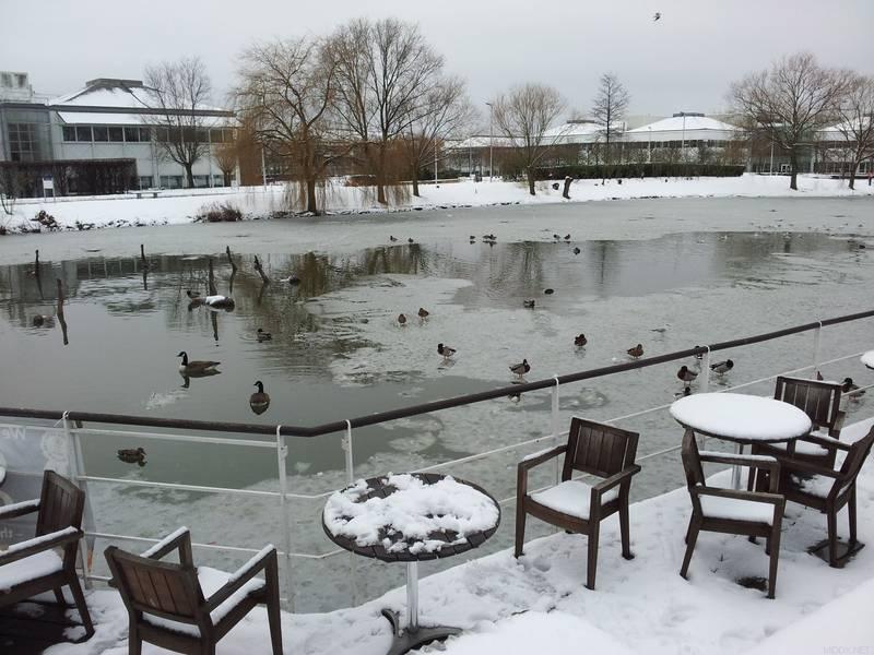 Stockely Park Winter 2012