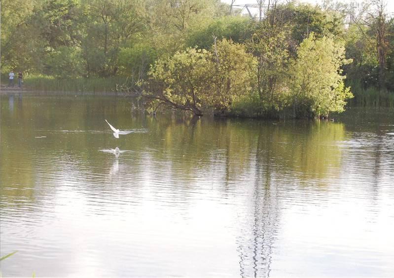Farlow's Lake (Iver ..nr. Uxbridge).
